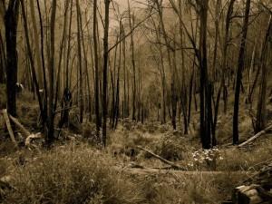 Árboles sin hojas en un bosque