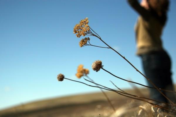 Ramas de una planta seca