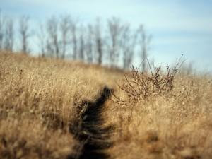 Hierbas secas en un campo