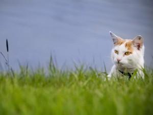 Postal: Un gato entre la hierba