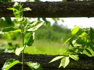Plantas creciendo junto a una valla de madera