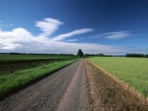Postal: Carretera rural
