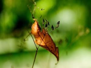 Una hoja seca sobre los tallos de una planta