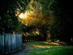 Grandes árboles recibiendo la escasa luz del sol
