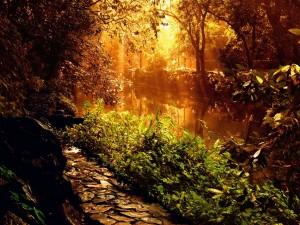 Postal: Luz solar iluminando el río y la vegetación