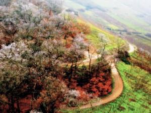 Caminos entre los árboles de un campo