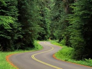 Carretera serpenteante entre árboles
