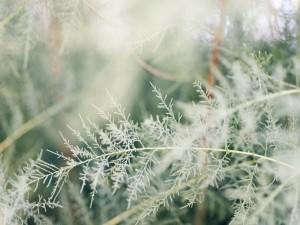 Postal: Plantas en la naturaleza