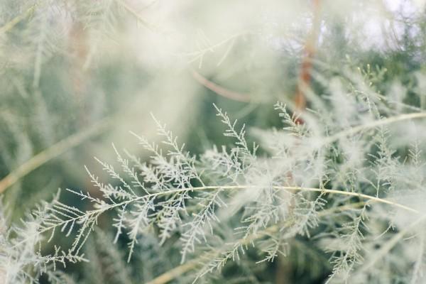 Plantas en la naturaleza