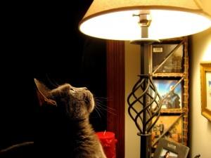 Postal: Gato junto a una lampara