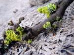 La rama de un árbol