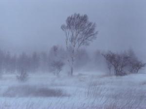 Postal: Nieve y viento