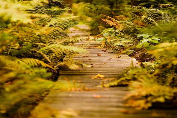 Camino entre helechos y hojas secas