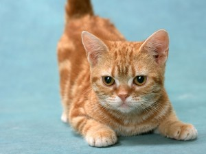 Postal: Un lindo gatito