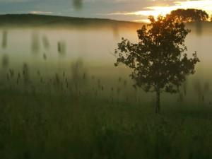 Árbol entre la niebla
