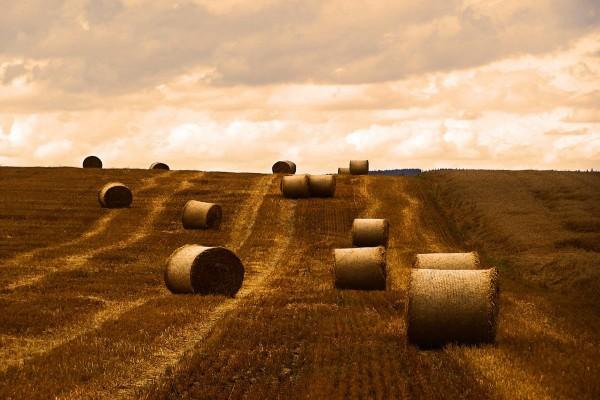 Fardos de paja en un campo