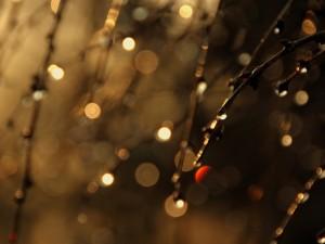 Gotas de agua brillando en las ramas de un árbol