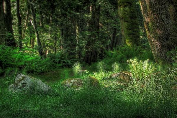 Árboles y vegetación en un bosque