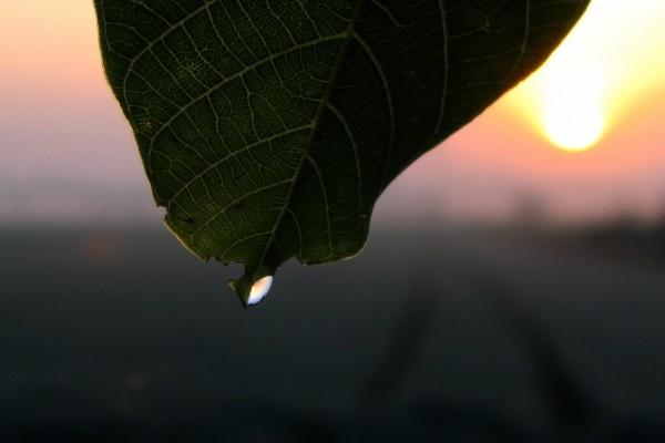 Gota de agua en la punta de una hoja