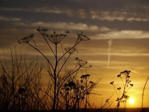 Plantas y el sol del atardecer