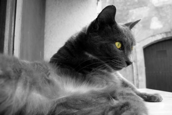 Un precioso gato tumbado en la ventana