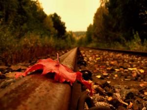 Gran hoja seca en la vía del tren