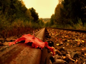 Postal: Gran hoja seca en la vía del tren