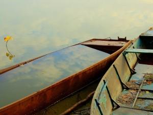 Barcas cubiertas de agua y hojas