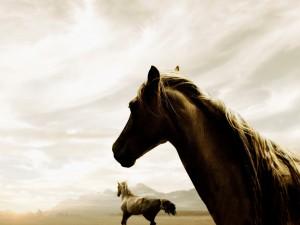 Postal: Hermosos caballos en el campo