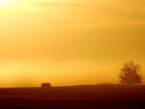 Postal: Atardecer anaranjado en el campo
