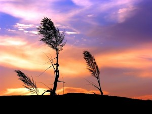 Plantas mecidas por el viento