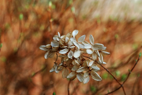 Flores secándose en la rama