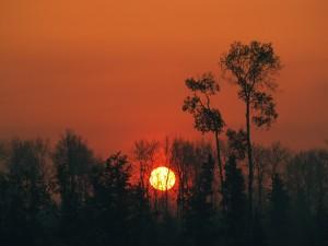 Postal: El sol del atardecer tras los árboles
