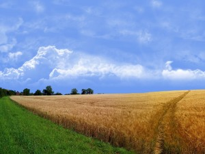 Campo seco y campo verde
