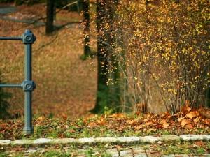 Postal: Hojas otoñales en el suelo