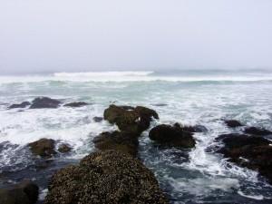 Postal: Gaviotas sobre las rocas marinas