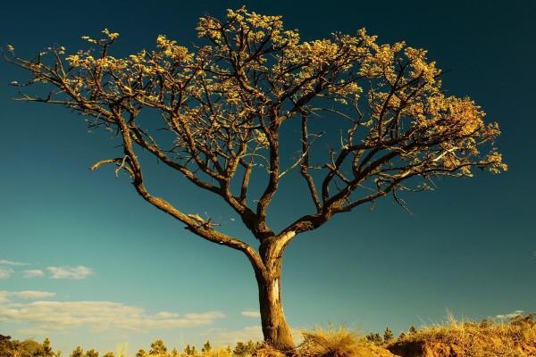 Un árbol en el campo
