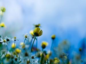 Flores blancas y amarillas en un campo