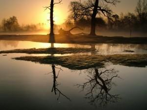 Postal: Dos árboles reflejados en el agua al atardecer