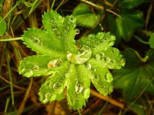 Postal: Gotas de agua sobre una planta verde