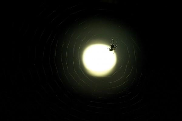 Foco iluminando a una araña en su tela
