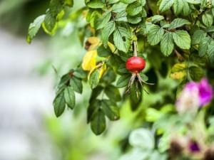 Postal: Fruto creciendo en una planta