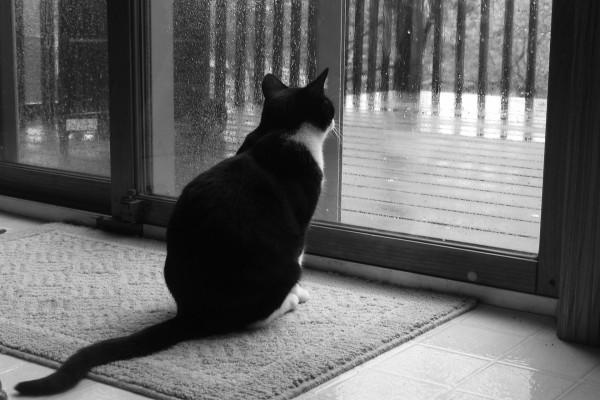 Gato mirando la lluvia tras la ventana