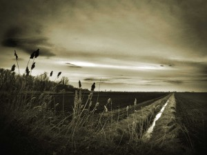 Postal: Un paisaje campestre