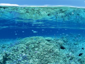 Peces en una zona del mar poco profunda