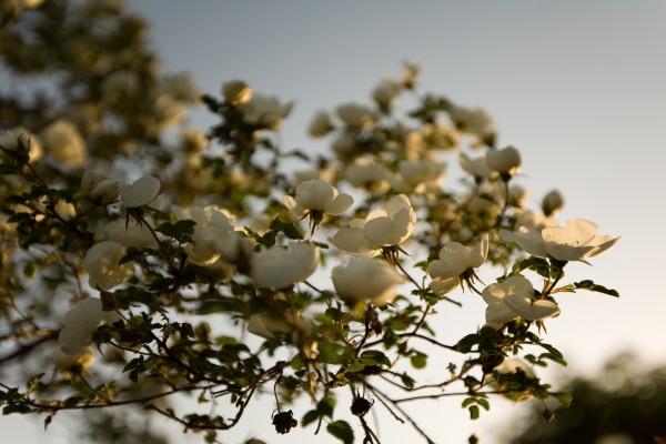 Flores en un árbol iluminadas por el sol