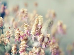 Bonitas flores colgantes
