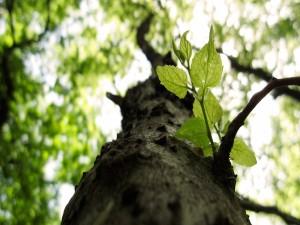 Postal: El tronco y las hojas de un árbol