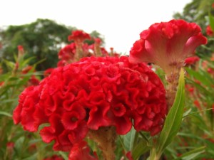 Postal: Bonitas flores en un jardín