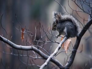 Ardilla en la rama de un árbol sin hojas